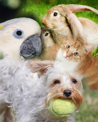 Variety of pets-bird, dog, cat, rabbit, etc.